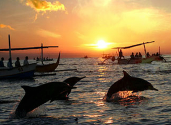 Delphintour Bali Urlaub
