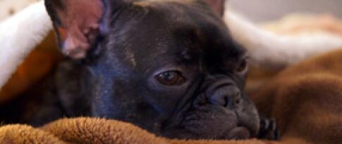 Hundepackage (Korb, Näpfe, Hundehandtuch)