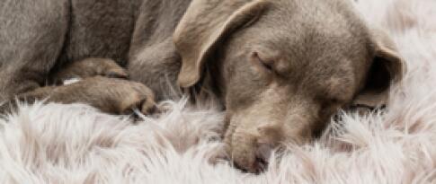 Haustier (Hund)