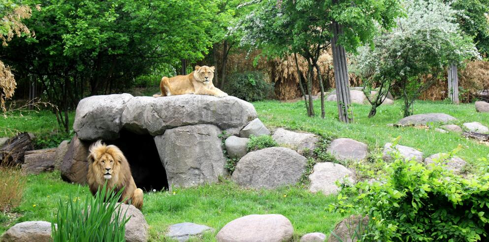 Zoo Leipzig 22282