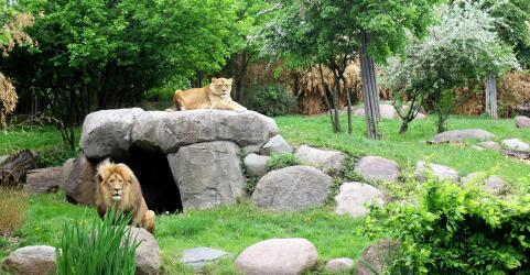 Zoo Leipzig 9