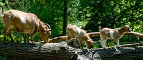 Freier Eintritt in den Wildpark