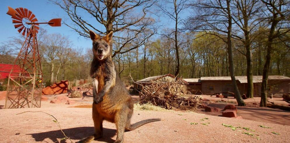 Erlebnis Zoo Hannover 26136