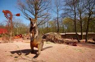 Eintritt in den Erlebnis Zoo Hannover mit Premium Hotel