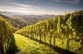 Entschleunigung und Weingenuss im bezaubernden Burgenland