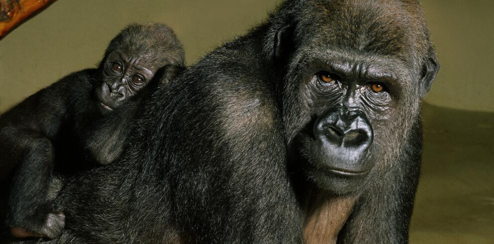 Zoo Köln 28698