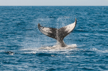 Wale-Monterey