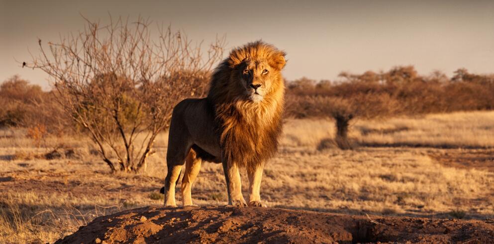 13 Tage Namibia Rundreise 32125