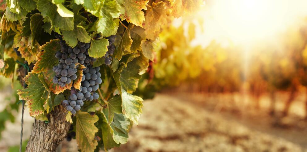Weinrundreise Italien 33438