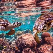 Kreuzfahrt Karibik