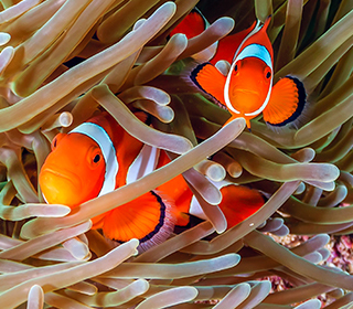 Thailand Korallenriff