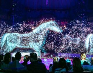 Circus Roncalli Pferd
