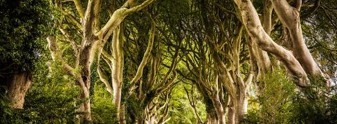 "Nordirland ""Game of Thrones"" Rundreise"