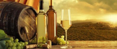 Weinführung im Schloss Wackerbarth