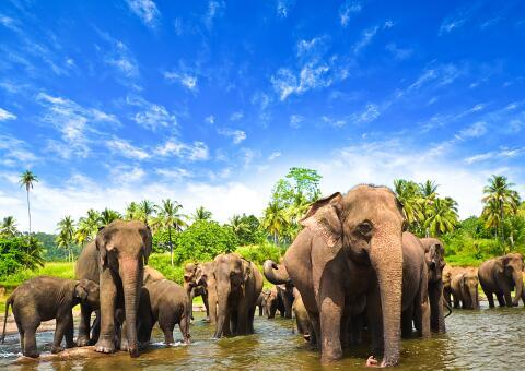 15 Tage Sri Lanka Rundreise