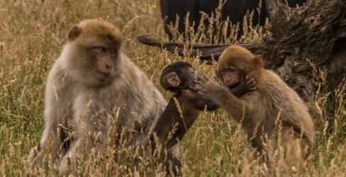 Zoo Safaripark Stukenbrock