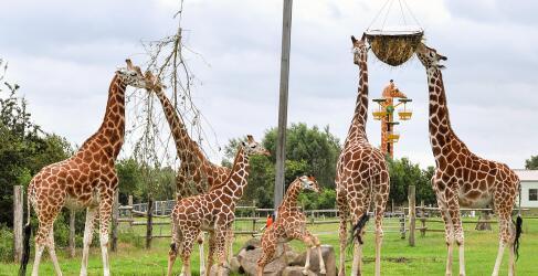 Jaderpark Tierpark