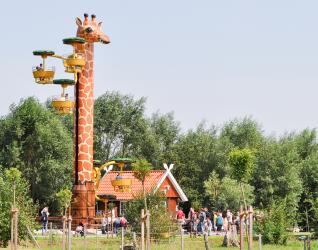 Jaderpark Giraffen