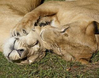 Serengeti Park Tiere