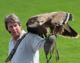 Bayern-Park Flugshow