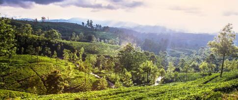 1 Woche Sri Lanka Gruppenrundreise im klimatisierten Reisebus