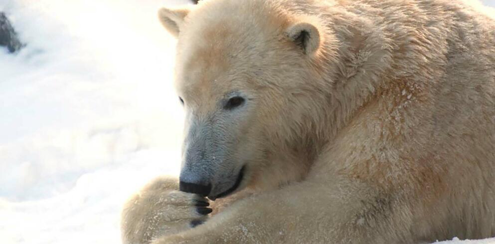 Erlebnis Zoo Hannover 58156