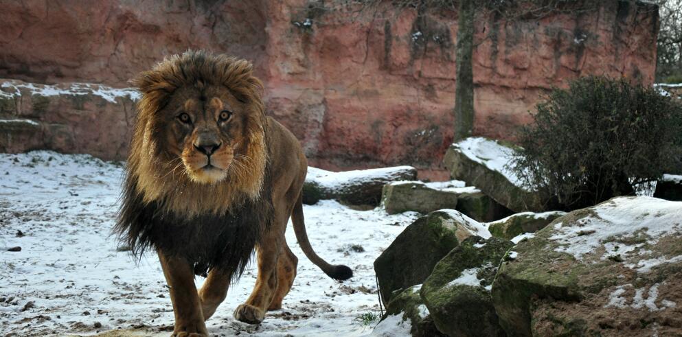 Erlebnis Zoo Hannover 58341