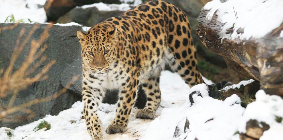 Zoo Leipzig 59115