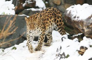 Tierisches Abenteuer im zweitbesten Zoo Europas für die ganze Familie
