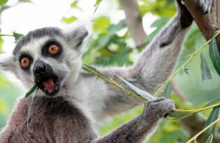 Zoo Dresden mit Übernachtung im Premium Hotel