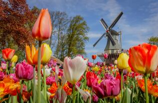 Keukenhof inklusive Premium Hotel in Amsterdam