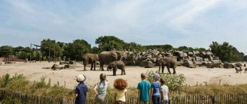 Tagesticket für den Safaripark Beekse Bergen