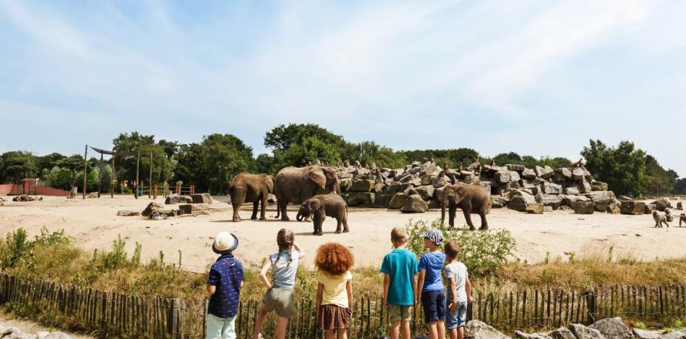 Van der Valk Hotel Vught + Safaripark Beekse Bergen 66233