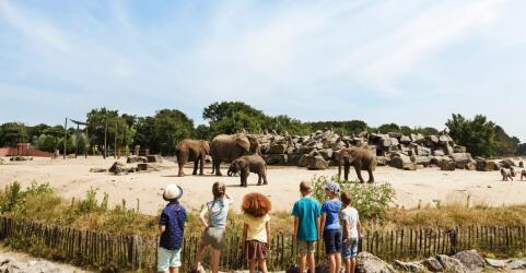 van-der-valk-vught-safaripark-beekse-bergen-10