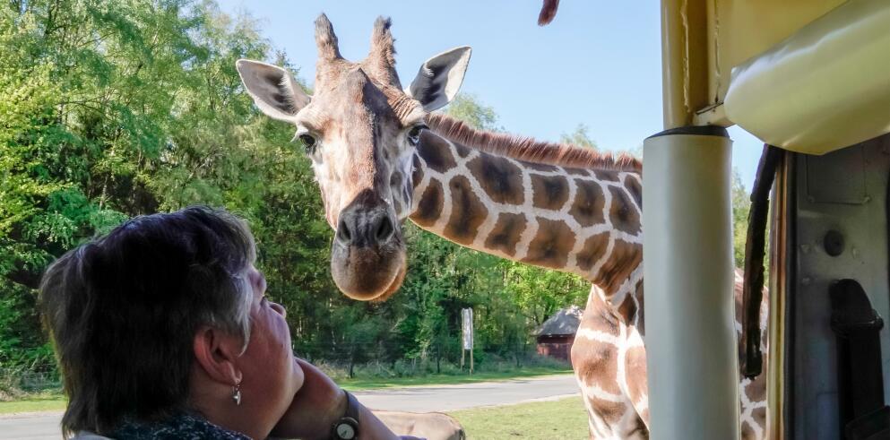 Hotel Heide Kröpke + Serengeti Park 69280