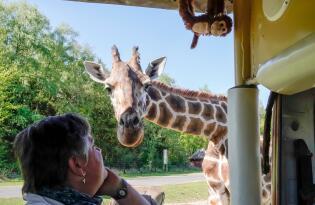 4* Hotel Heide Kröpke + Serengeti Park