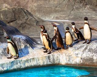 Zoo Urlaub