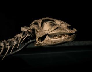 dinosaurier naturkundemuseum
