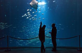 Tauchen Sie ab in die tiefblauen Unterwasserwelten