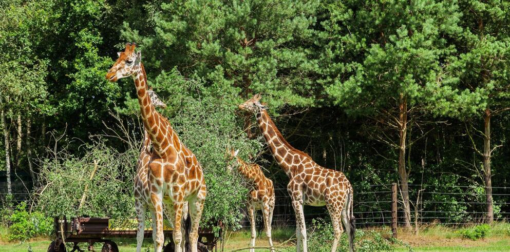 serengeti-park-2